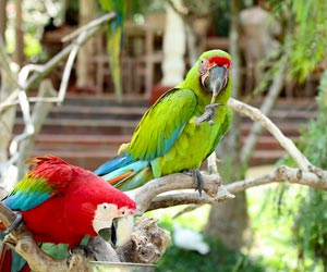 Bali-Bird-Park-dan-Ubud-Art-Village